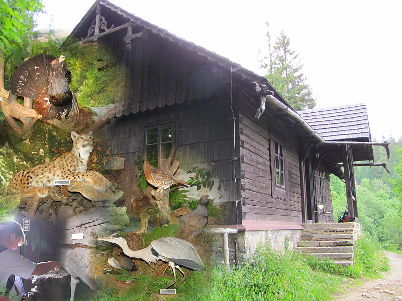 Izba Leśna i fragment jej ekspozycji.