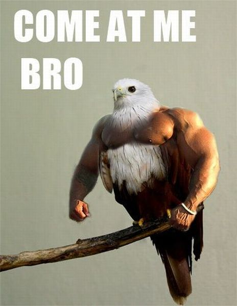 have seen the whole of the inter  come at me bro bird