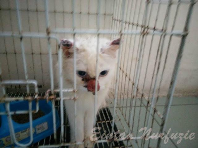 Rawatan Kes Sporo Kucing