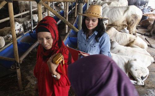 SEORANG jurujual wanita yang berpakaian seperti koboi mengiringi pelanggan wanita di bilik pameran jualan lembu di Depok semalam.