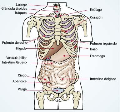 Un Poco De Ciencia : Anatomía de Superficie