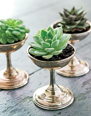 succulents in silver glasses
