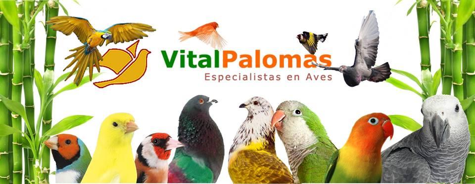 Vitalpalomas
