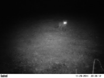 Camera Trap Mammal Photo 4