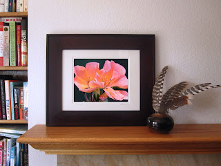 A framed display of the delicate sunlit pink blossoms of a geranium in sunset colors of tangerine, fuchsia, and orange.