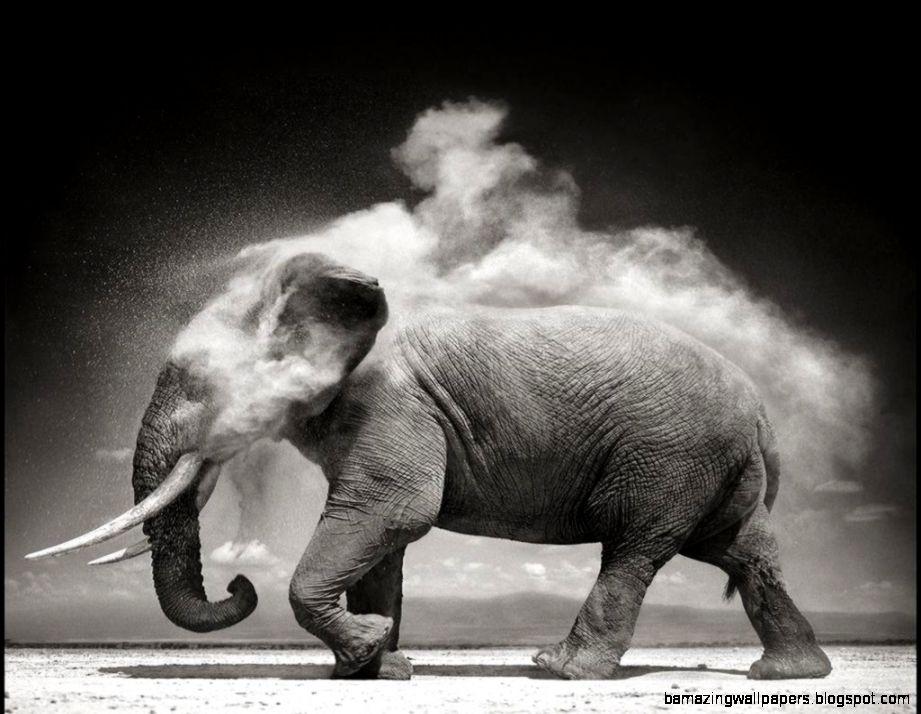 Elephant Wallpaper Desktop Black And White