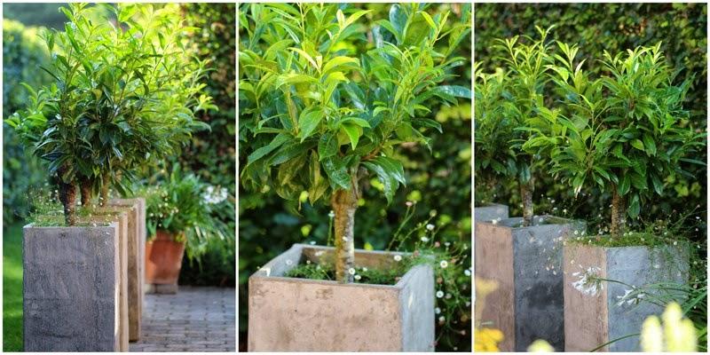 Havefolket: smÅ trÆer i krukker