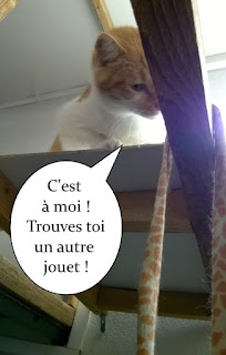 Hollywood, un chat roux et blanc !