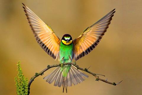 Burung-Burung Di dalam Al-Quran