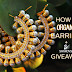 How To Organize Earrings + Swarovski Giveaway