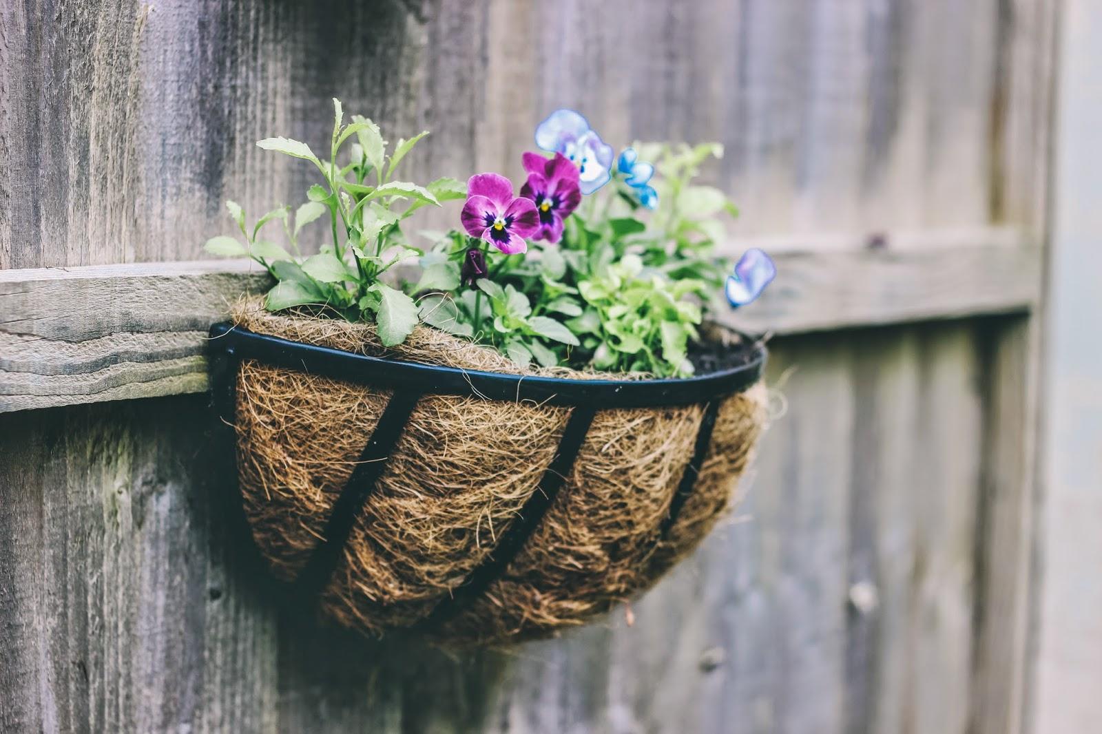 Pansies in basket - growing flowers in a small space