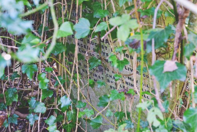 Gravestone hidden by overgrowth