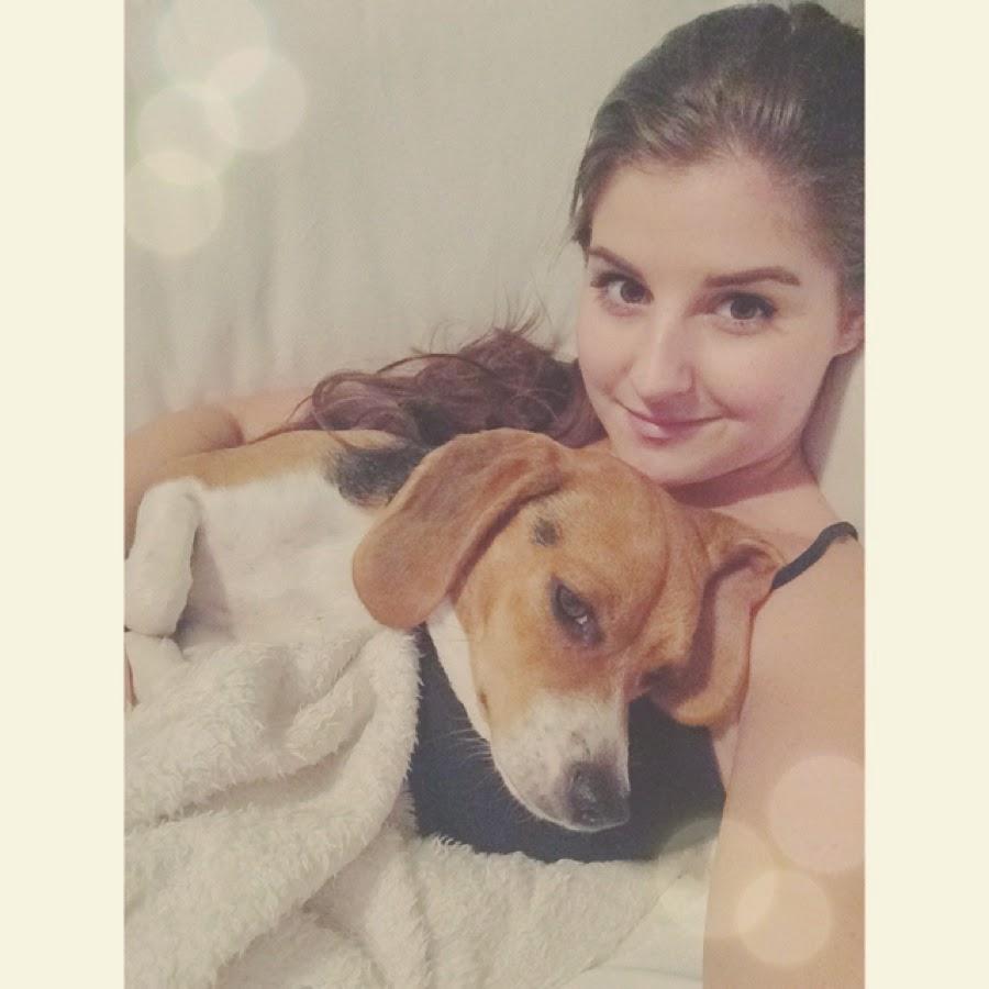 beagle puppy