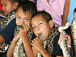 Πωλούνται φίδια