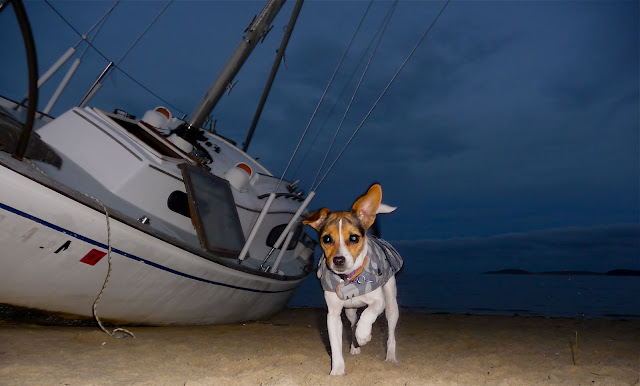 Dog On Beach with Boat