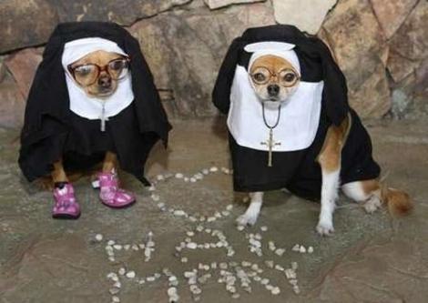 Animals Wearing Halloween Costume Elite Funny