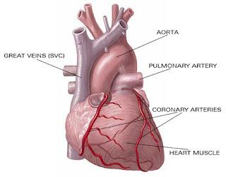 Apa itu penyakit jantung? - Penyebab - Cara Mengatasi, penyakit jantung 2013, contoh penyebab penyakit jantung, akibat terjadinya serangan jantung