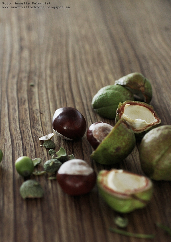 ekollon, odla ekollon, gro ekollon, oak, baby oak, kastanjer, gro rötter, kastanj, ek, ekplanta, ekplantor, växter, inredning,