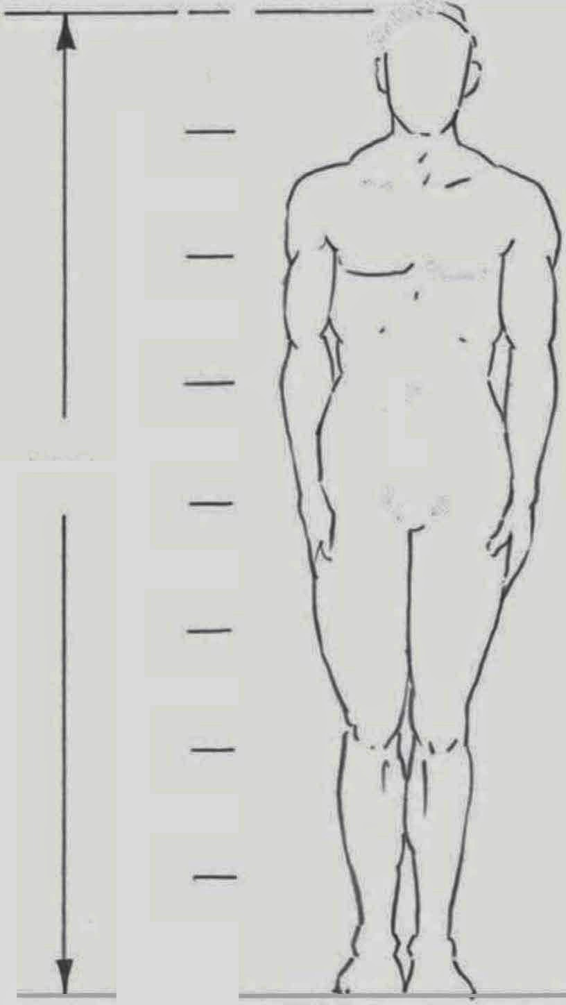 Drawings: ADULT BODY PROPORTIONS