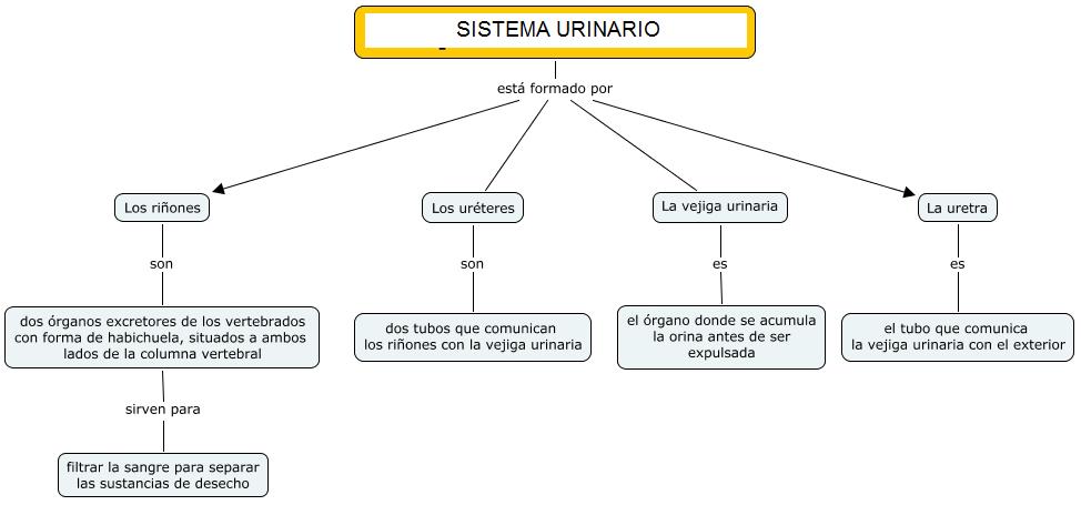 LA MINA .... 4º de PRIMARIA: EL SISTEMA URINARIO - MAPA CONCEPTUAL