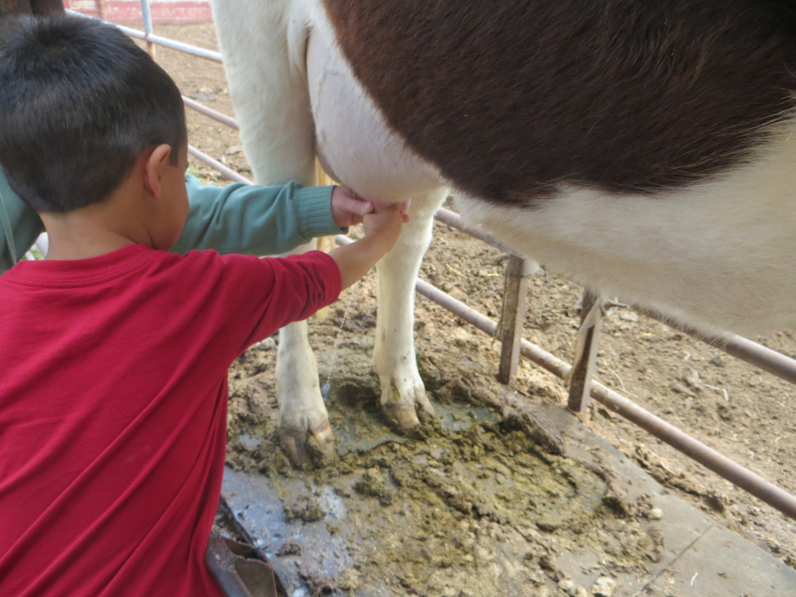 The Saavedra Family Blog Amy S Farm Field Trip