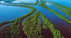Amazonas brasileira