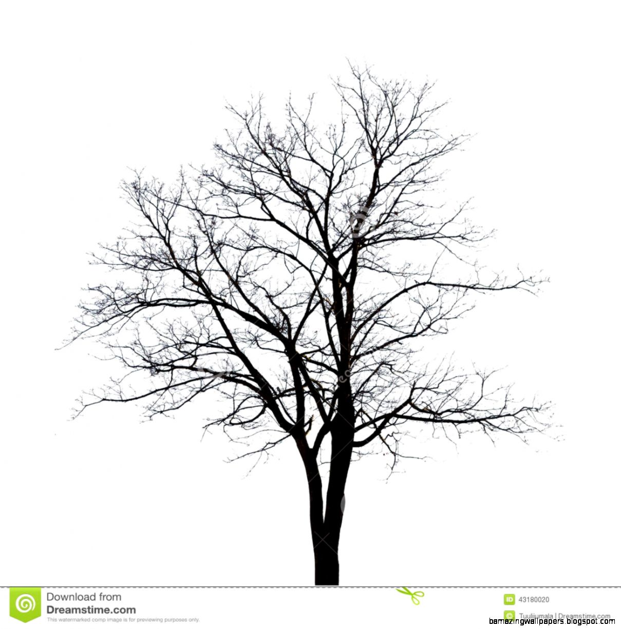 Bare Tree Stock Illustration   Image 43180020