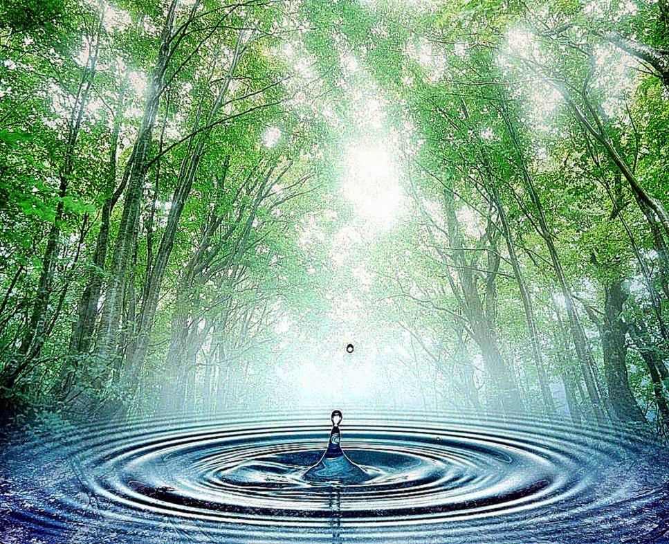 1152x864 Nature Rain Drop Wallpaper Download