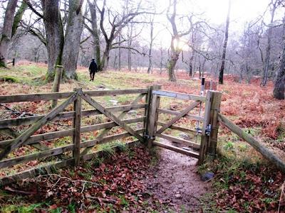 Walking through Torphantrick Wood, south Deeside
