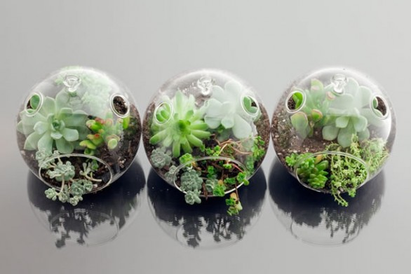 mini jardim curitiba : mini jardim curitiba:Cool Terrarium Containers
