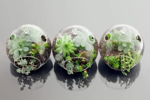 mini jardim curitiba:Cool Terrarium Containers