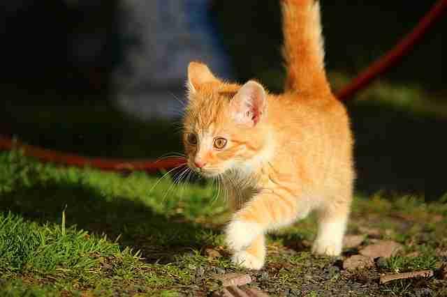 Ahmet ve Kedinin Hikayesi