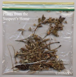 Evidence bag of plants from the suspect's home