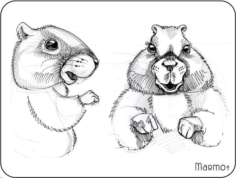 cute groundhog marmot drawing