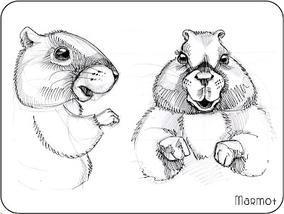 cute groundhog, marmot, woodchuck