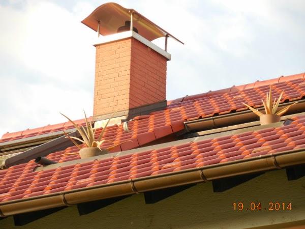 Aloe Vera pe acoperis
