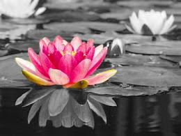 La flor que crece en la adversidad es la más hermosa de todas.