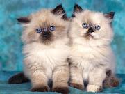 Cute cat cute cat