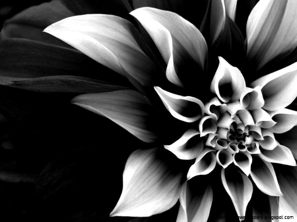 flower black white  Zellox