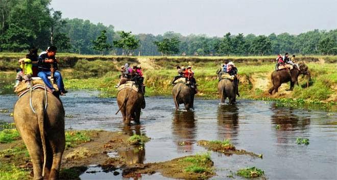 chitwan national park jungle safari in nepal