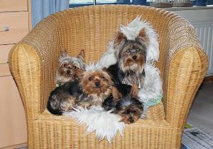 Ginny, Caya, Bram en Nina