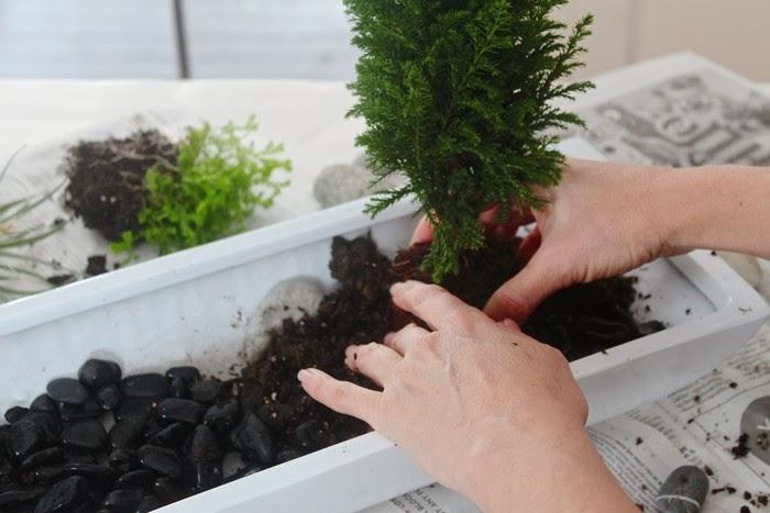 Paso a paso un jard n zen en miniatura guia de jardin for Jardin zen miniature casa