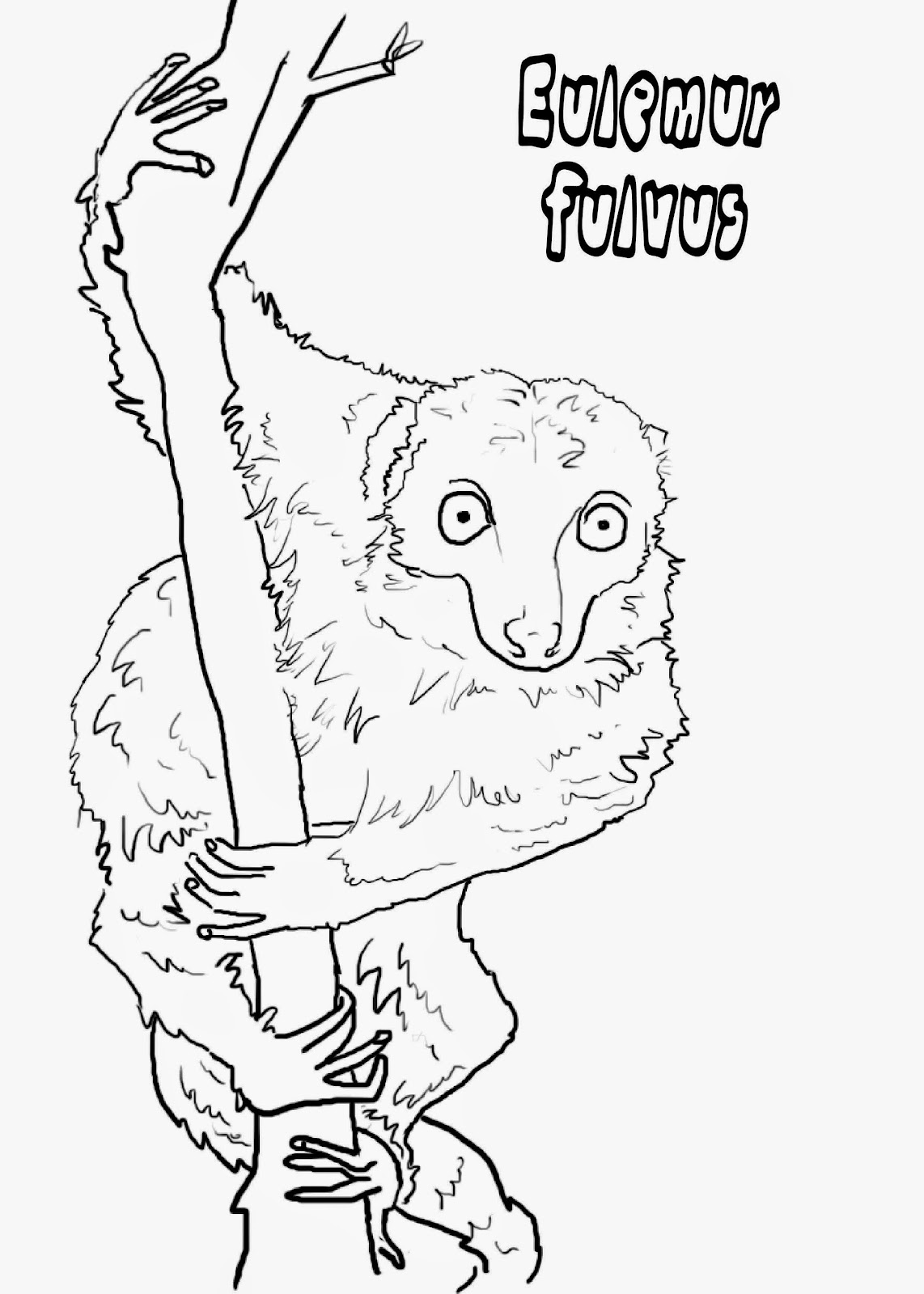 """<img src=""""Eulemur Fulvus.jpg"""" alt=""""Lémures para colorear""""/>"""