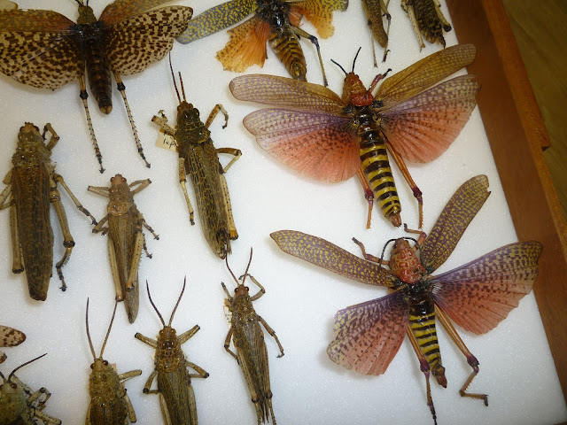 oxford university museum of natural history orthoptera via lovebirds vintage