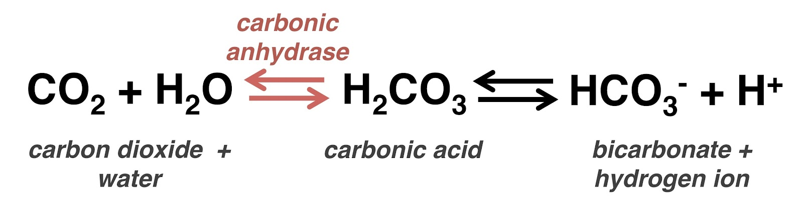 The Mad Science Blog: Chemistry of Beer: Carbon Dioxide vs Nitrogen