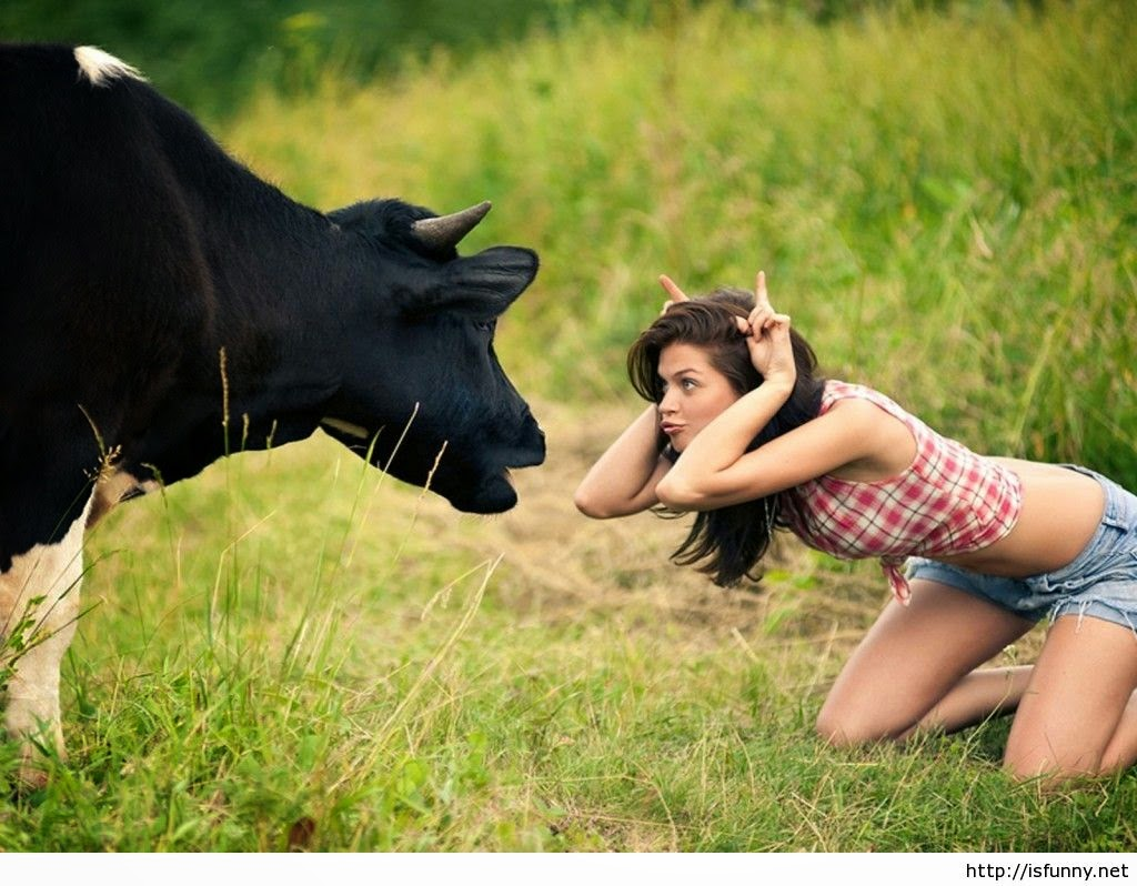 Must Seen Cow adn Girl Funny 2015 Wallpaper