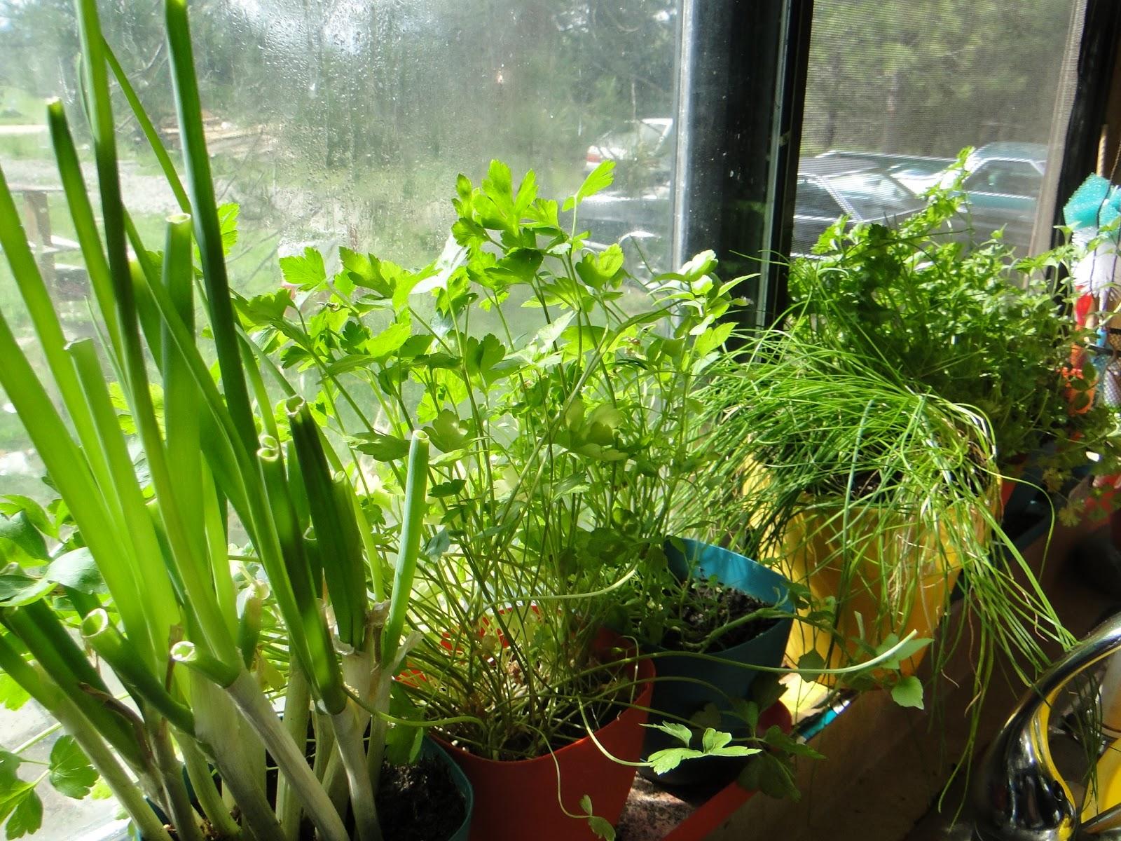 mistress of my domain windowsill herb garden