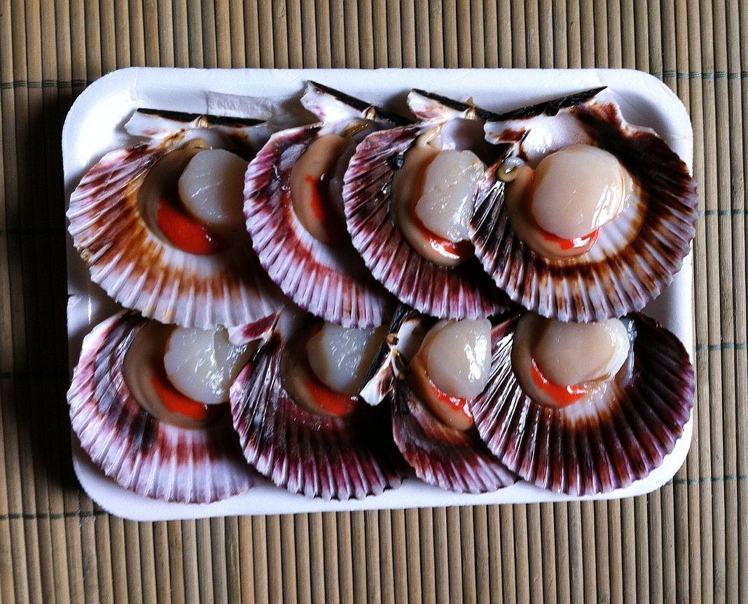 Cocinar Vieiras Plancha | La Cocina Del Francesc Vieiras A La Plancha