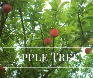 クラブアップルの木