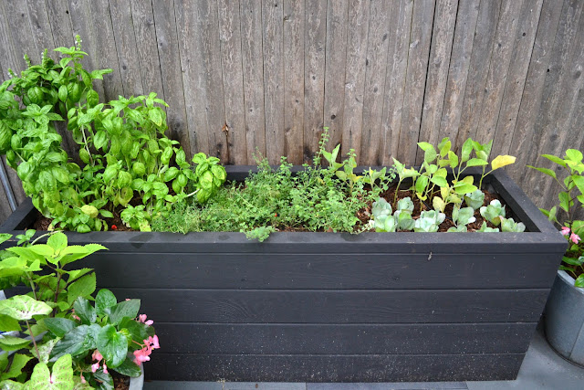 Urban Gardening:  Will the Veggies Live?